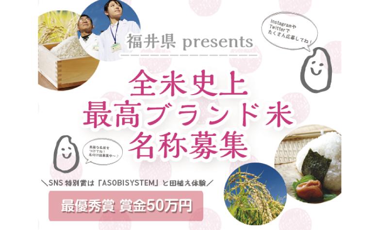 fukui_kome